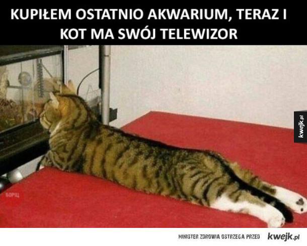 własny telewizor