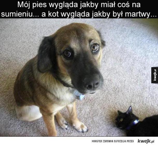 Podejrzana sytuacja - Mój pies wygląda jakby miał coś na sumieniu a kot wygląda na martwego