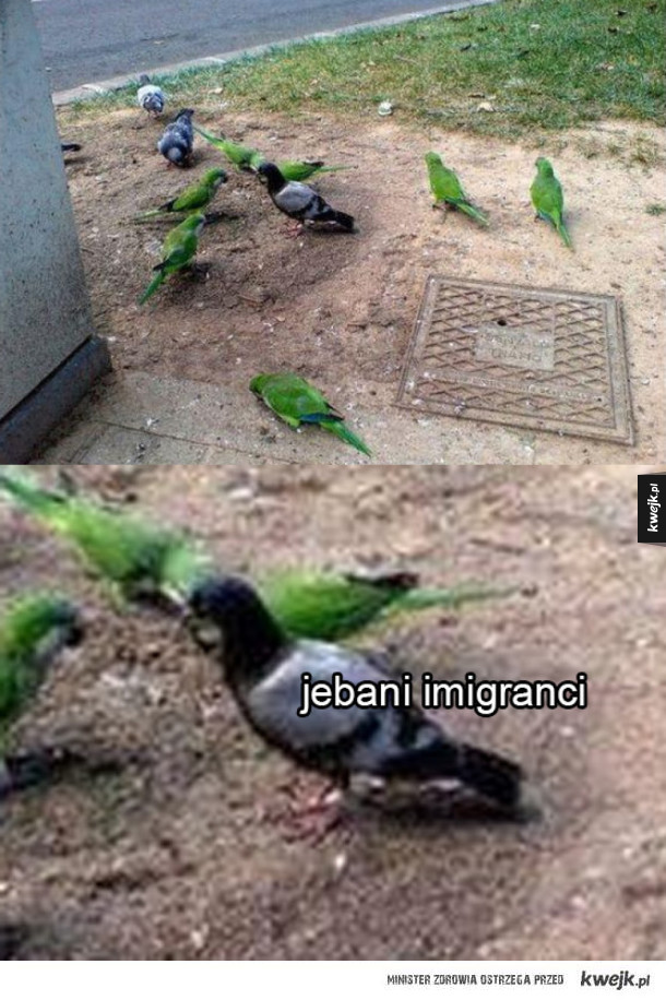 Nienawiść do imigrantów