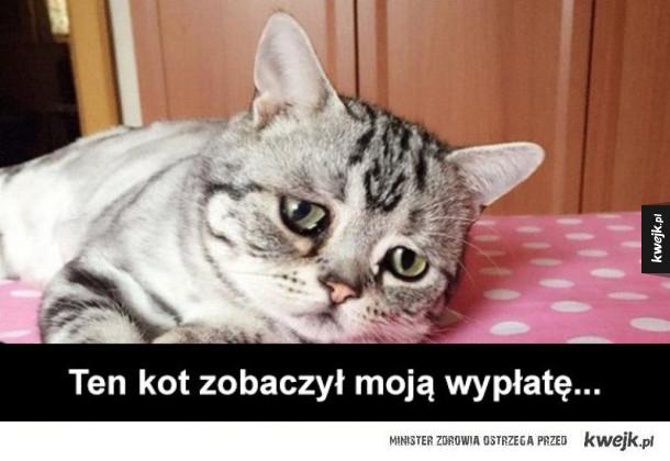 kot się załamał