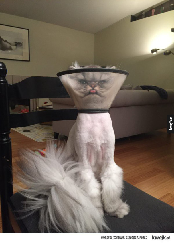 Najlepsze koty 2016, według japońskich Internautów