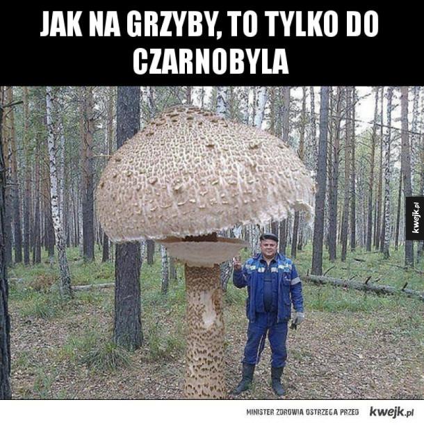Grzyby w Czarnobylu