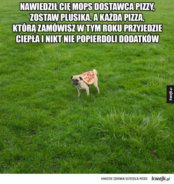 Mops dostawca pizzy