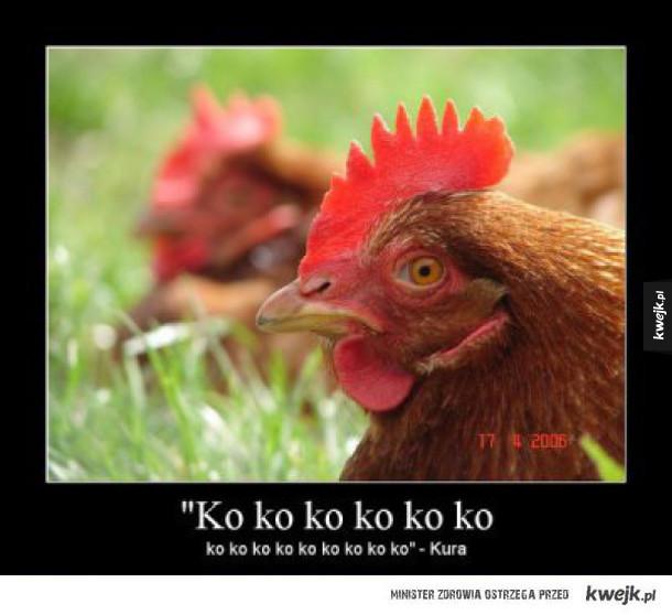 Typowa kura
