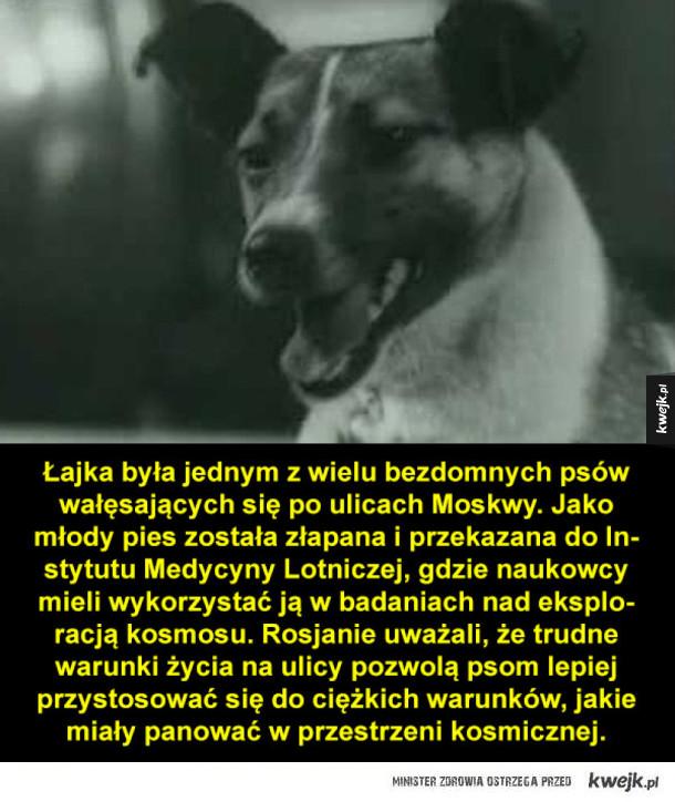 Łajka, pierwszy pies w kosmosie