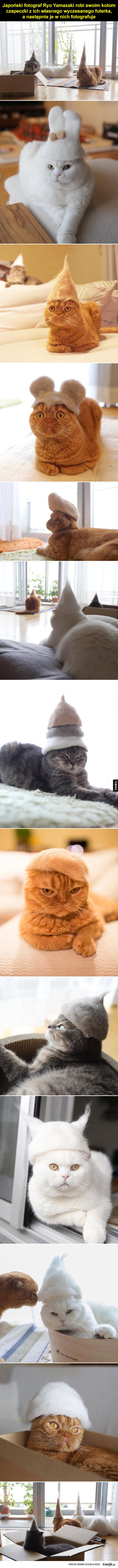 Koty w uroczych czapeczkach z futra