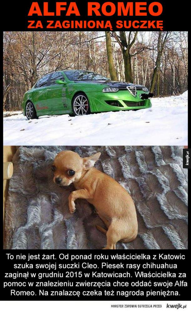 Niezła nagdroda za znalezienie psa :)