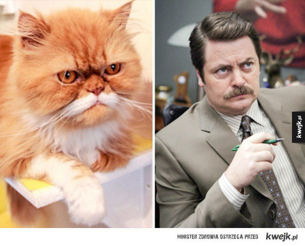 Koty, które wyglądają jak różni ludzie