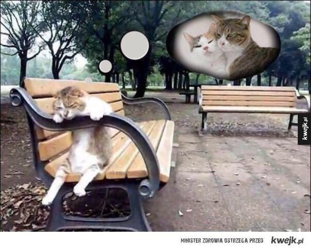 bo to zła kocica była