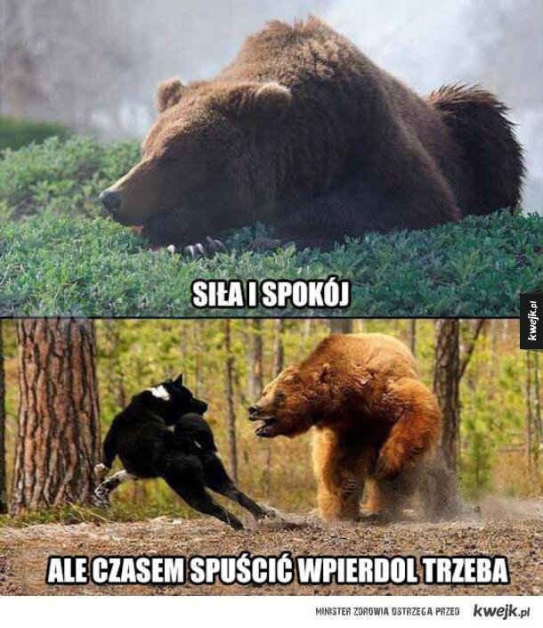 krótko o niedźwiedziu