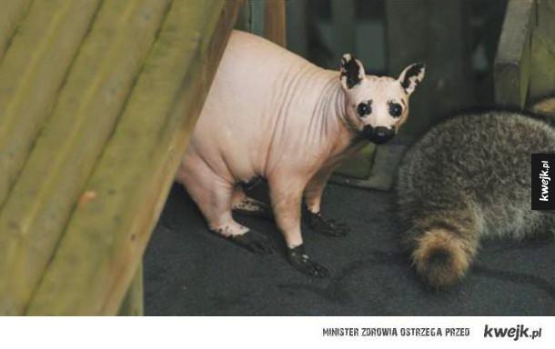 Zwierzęta bez sierści, które wyglądają naprawdę przerażająco