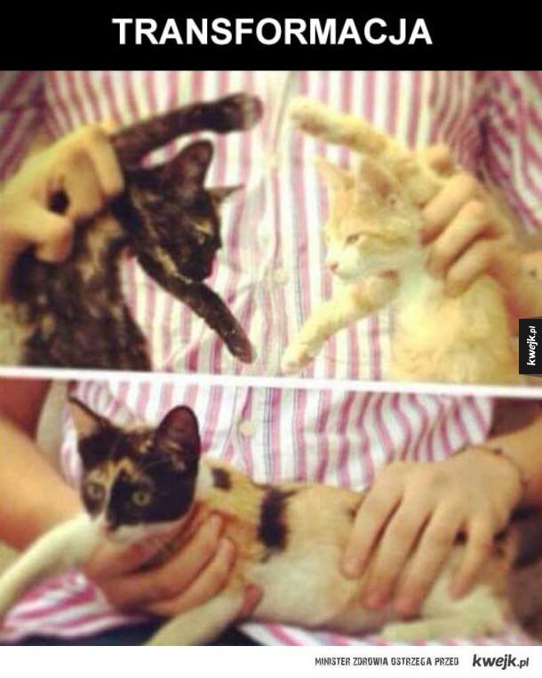 przemieniające się koteły