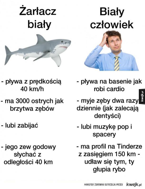 Żarłacz biały vs. biały człowiek