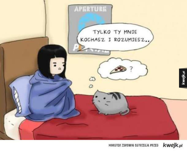 koteł zrozumie zawsze