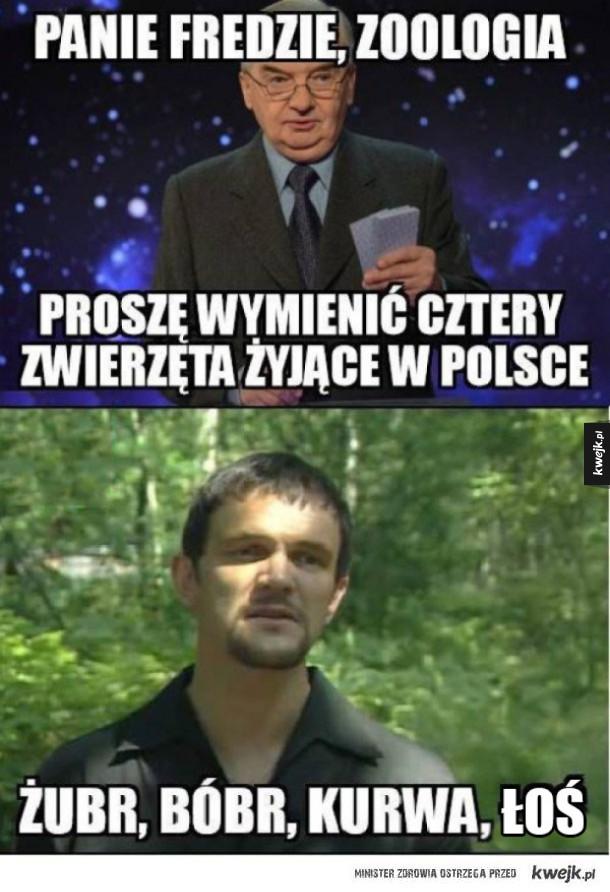 Cztery zwierzęta żyjące w Polsce
