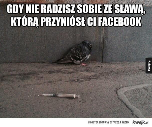 Gołąb z facebooka
