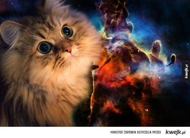 Kosmiczne kotki (i jeden pies)