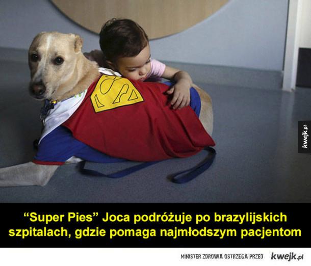 Psy są najlepsze!