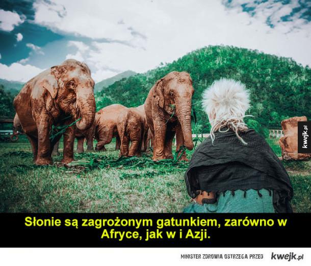 Wolontariat w... schronisku dla słoni