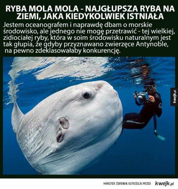 Mola Mola - najgłupsza ryba, która zamieszkuje oceany