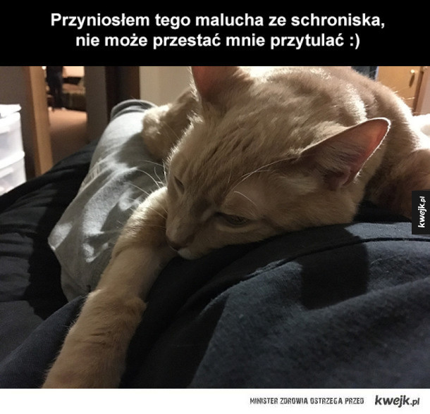wdzięczny kociak