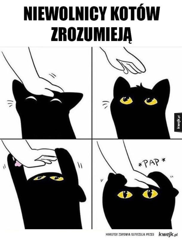 Bo koty to rasa panów