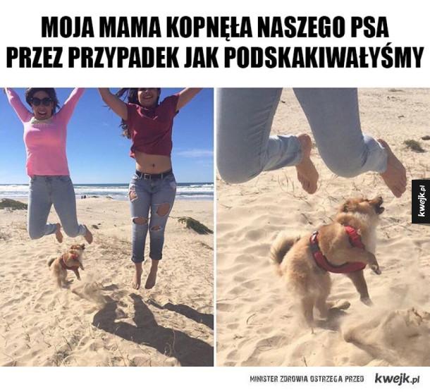 Pies został znokautowany