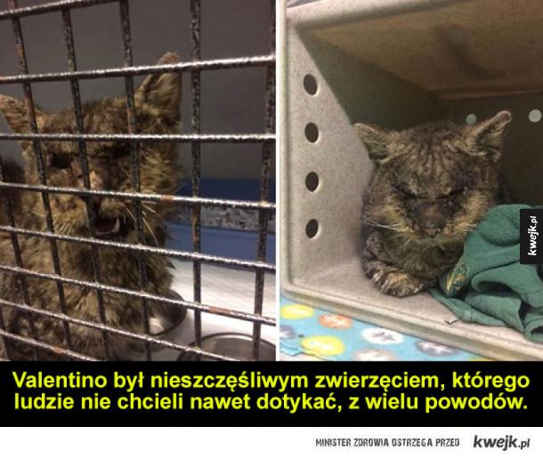 Historia kota, którego nikt nie chciał nawet dotknąć