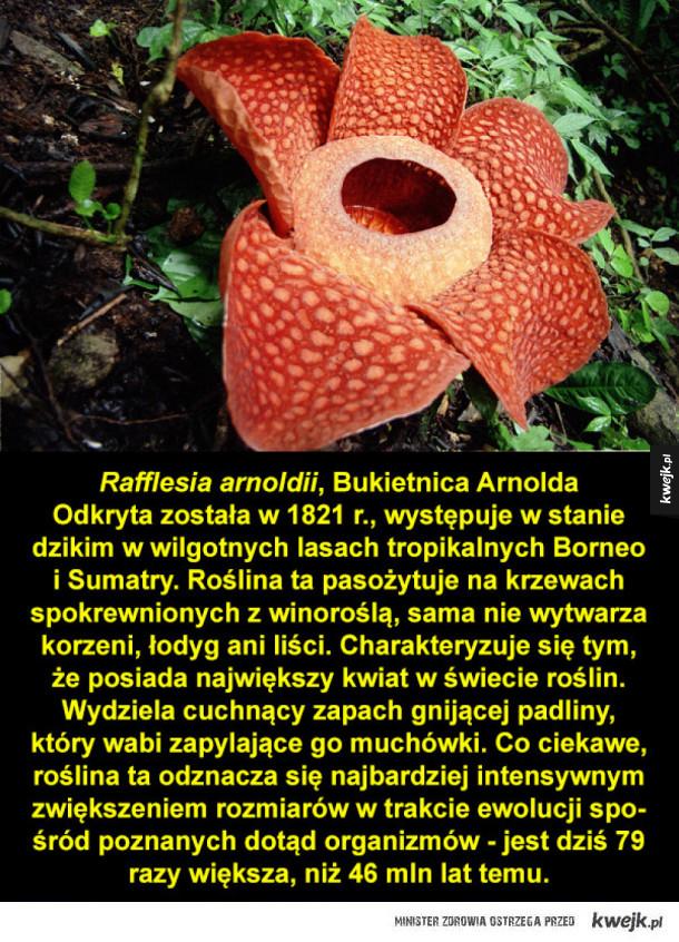 Prawdopodobnie najdziwniejsze rośliny z całego świata