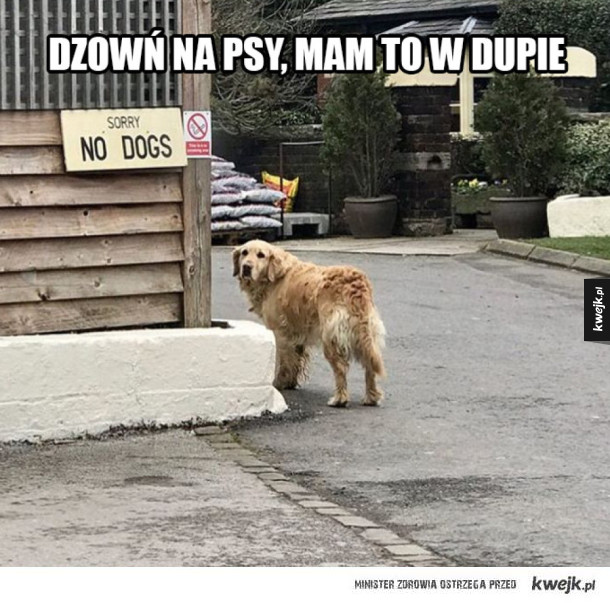 Pies olewa zakazy