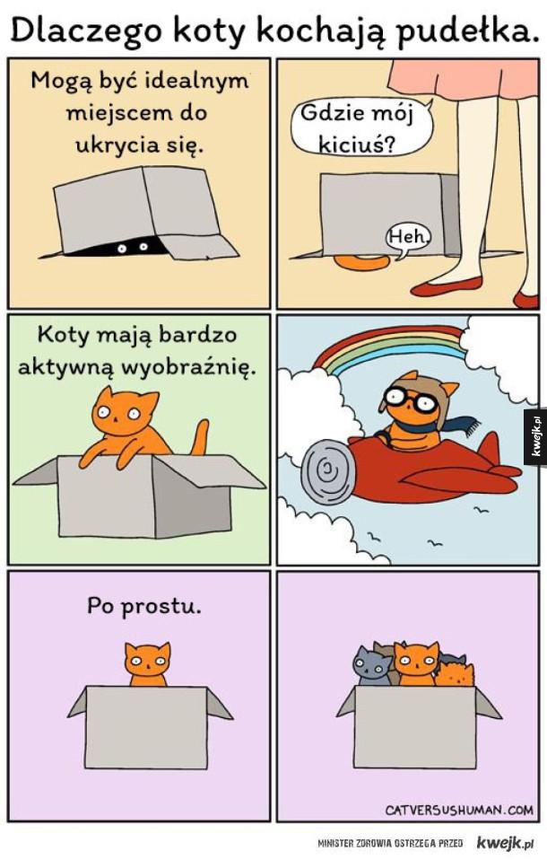 Koty i pudełka