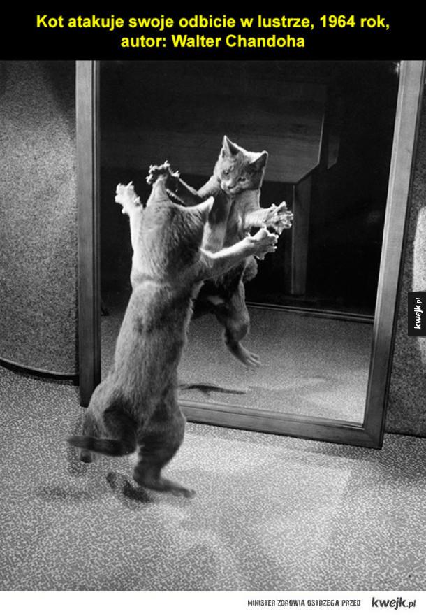Niesamowite fotografie z archiwum National Geographic