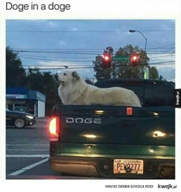Doge in Doge