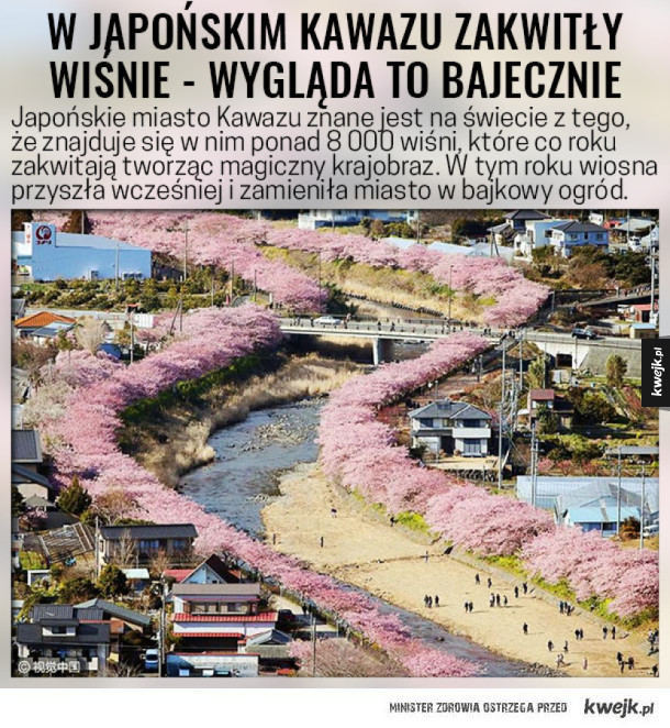 Bajkowy krajobraz z rozkwitających wiśni w kraju kwitnącej wiśni