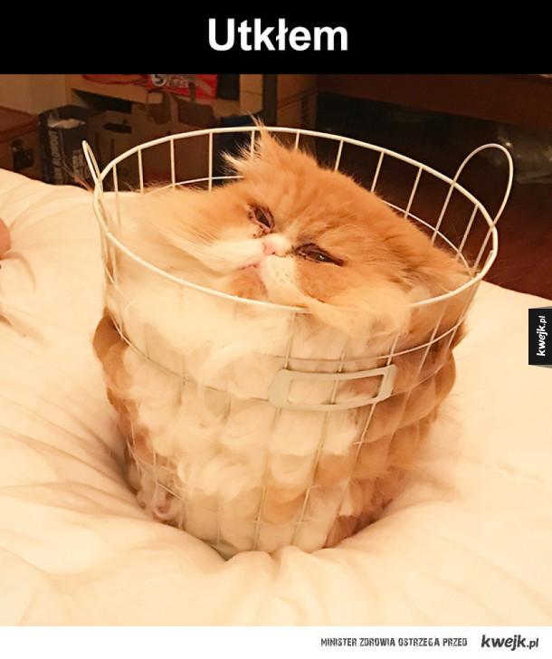 koci przypał