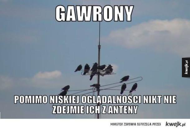 Gawrony pomimo niskiej oglądalności nikt nie zdejmuje ich z anteny