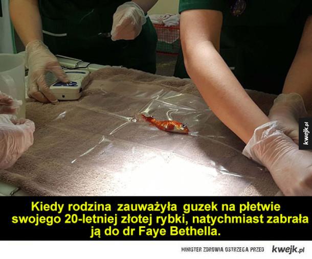 Operacja złotej rybki