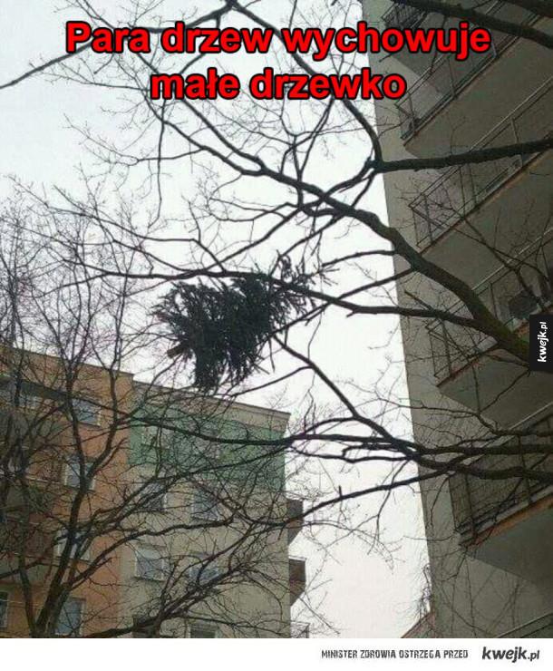 Drzewa mają młode