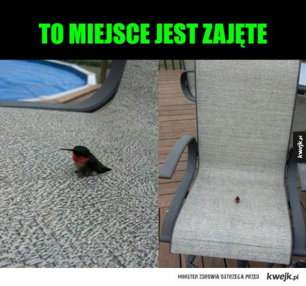 mały ptak