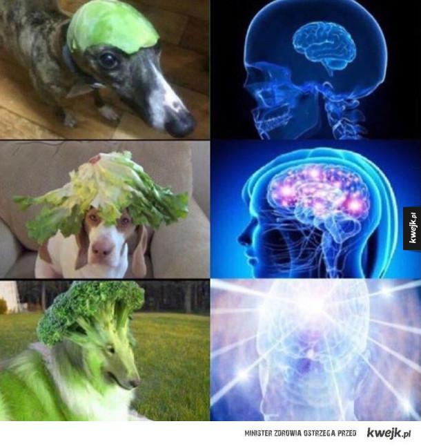 Fuzje brokuła i psa