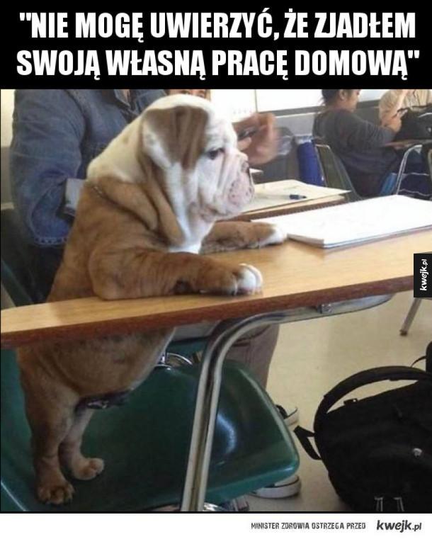 Pies w szkole