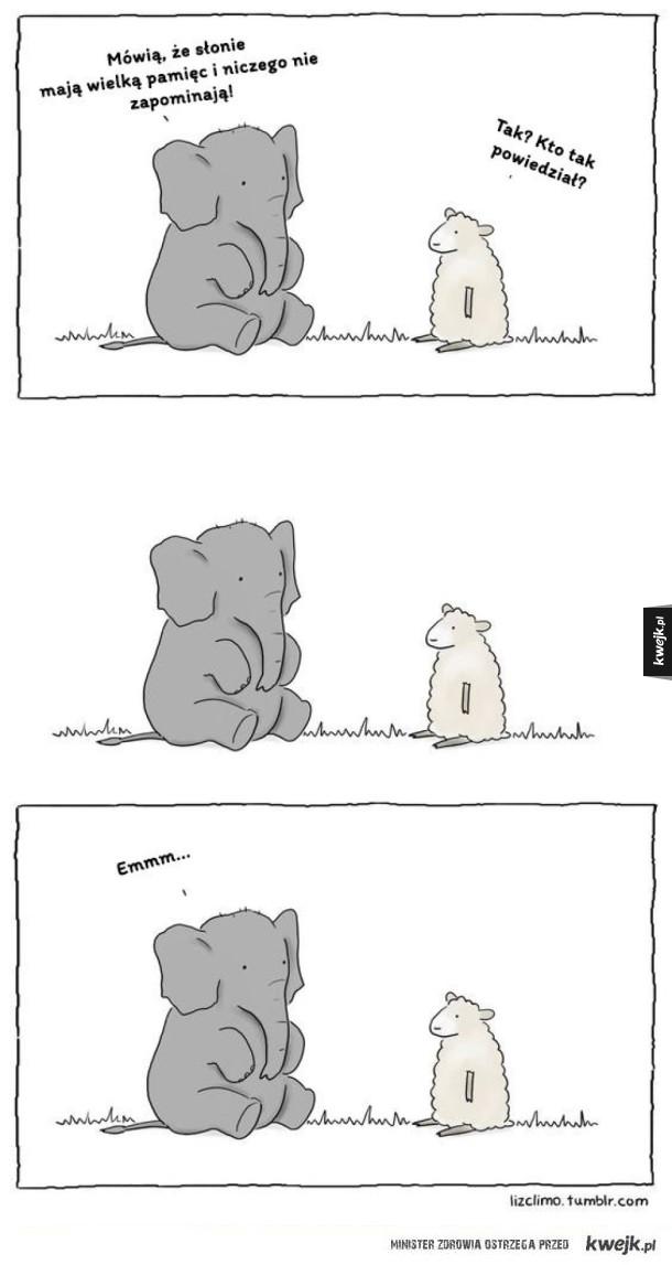 Słonie mają wielką pamięć