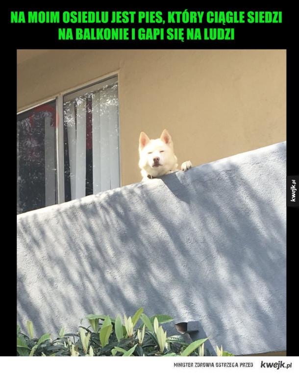 pieseł na balkonie