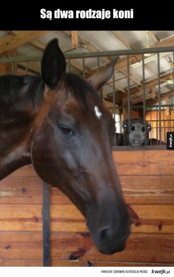 rodzaje koni