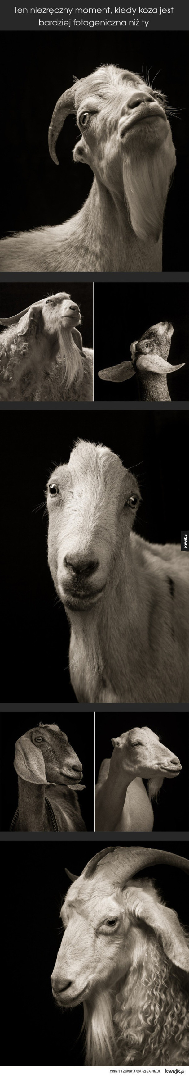 Fotogeniczna koza