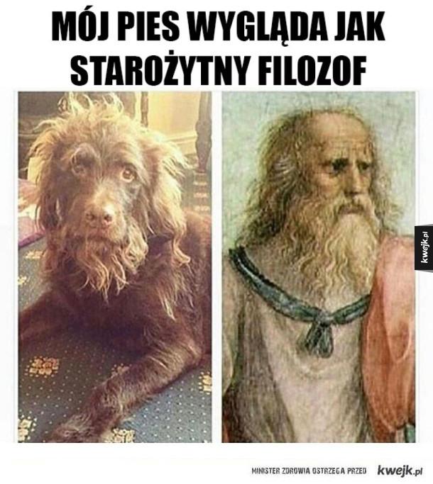 Pies wyglądający jak Grecki filozof