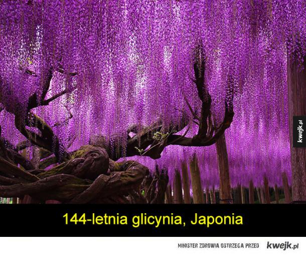 Najpiękniejsze drzewa na świecie