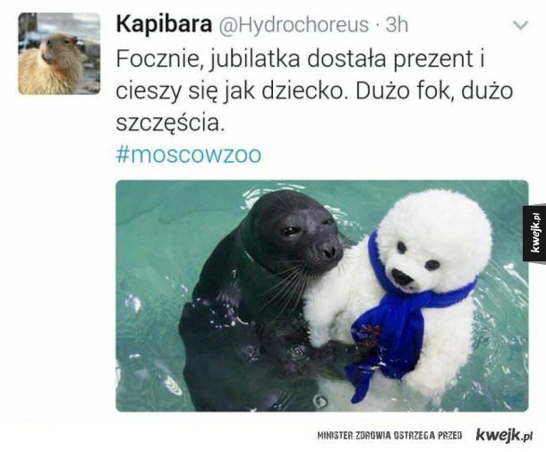 Szczęśliwa foka