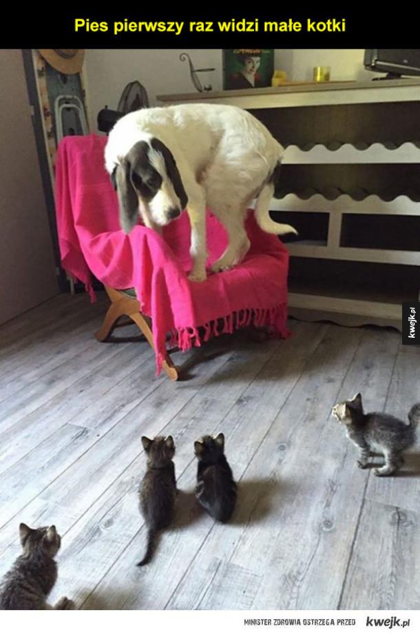Zwierzęta, które po raz pierwszy robią różne rzeczy