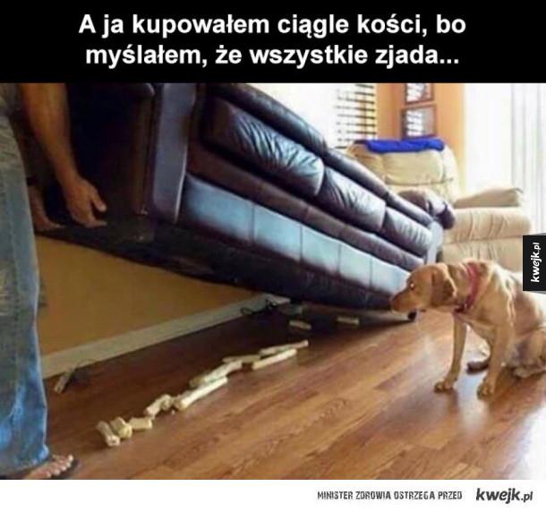 pies zbieracz